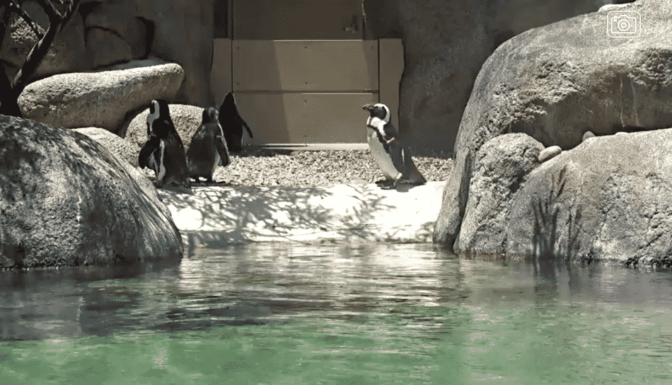 Penquins at the Zoo